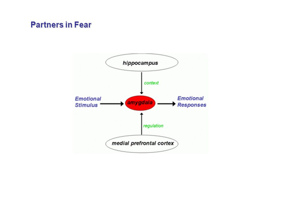 Partners in Fear