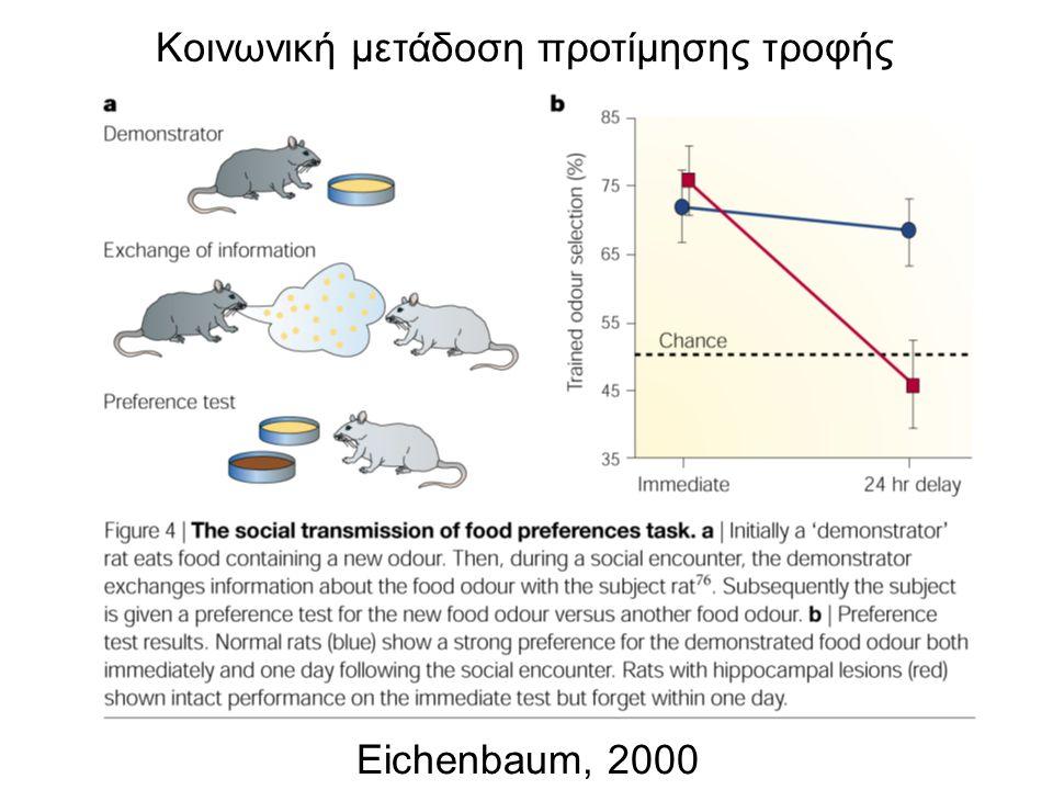 Κοινωνική μετάδοση προτίμησης τροφής Eichenbaum, 2000