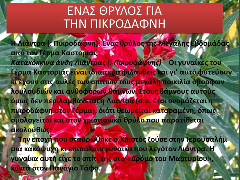 ΕΝΑΣ ΘΡΥΛΟΣ ΓΙΑ ΤΗΝ ΠΙΚΡΟΔΑΦΝΗ Η Λιάντρα (: Πικροδάφνη). Ένας θρύλος της Μεγάλης Εβδομάδας από τον Γέρμα Καστοριάς Κατακόκκινα άνθη Λιάντρας (: Πικροδ