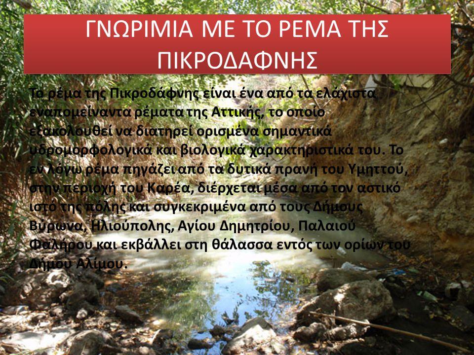 Το ρέμα της Πικροδάφνης είναι ένα από τα ελάχιστα εναπομείναντα ρέματα της Αττικής, το οποίο εξακολουθεί να διατηρεί ορισμένα σημαντικά υδρομορφολογικ