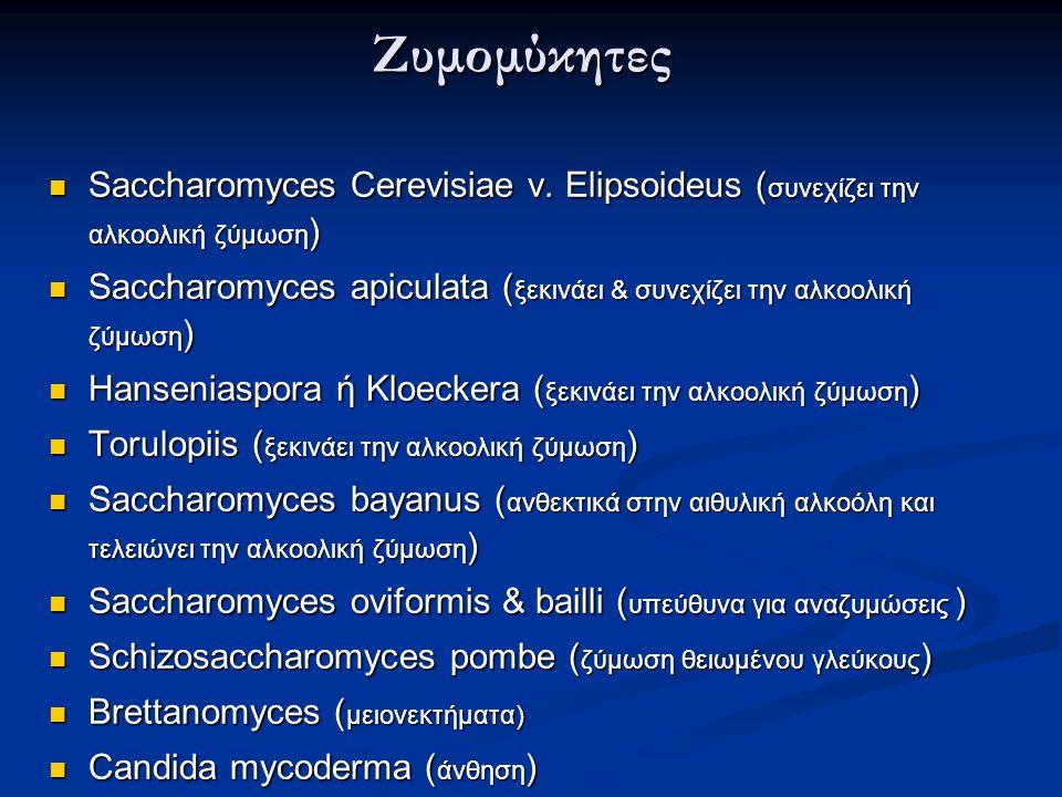 Ζυμομύκητες Saccharomyces Cerevisiae v.