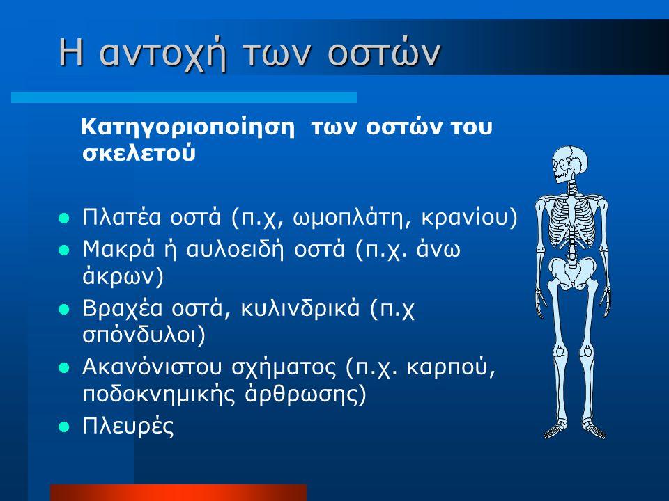 Η αντοχή των οστών Κατηγοριοποίηση των οστών του σκελετού Πλατέα οστά (π.χ, ωμοπλάτη, κρανίου) Μακρά ή αυλοειδή οστά (π.χ. άνω άκρων) Βραχέα οστά, κυλ