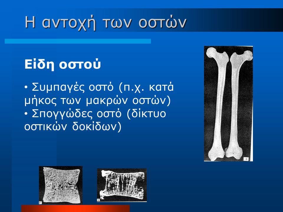 Η αντοχή των οστών Είδη οστού Συμπαγές οστό (π.χ. κατά μήκος των μακρών οστών) Σπογγώδες οστό (δίκτυο οστικών δοκίδων)