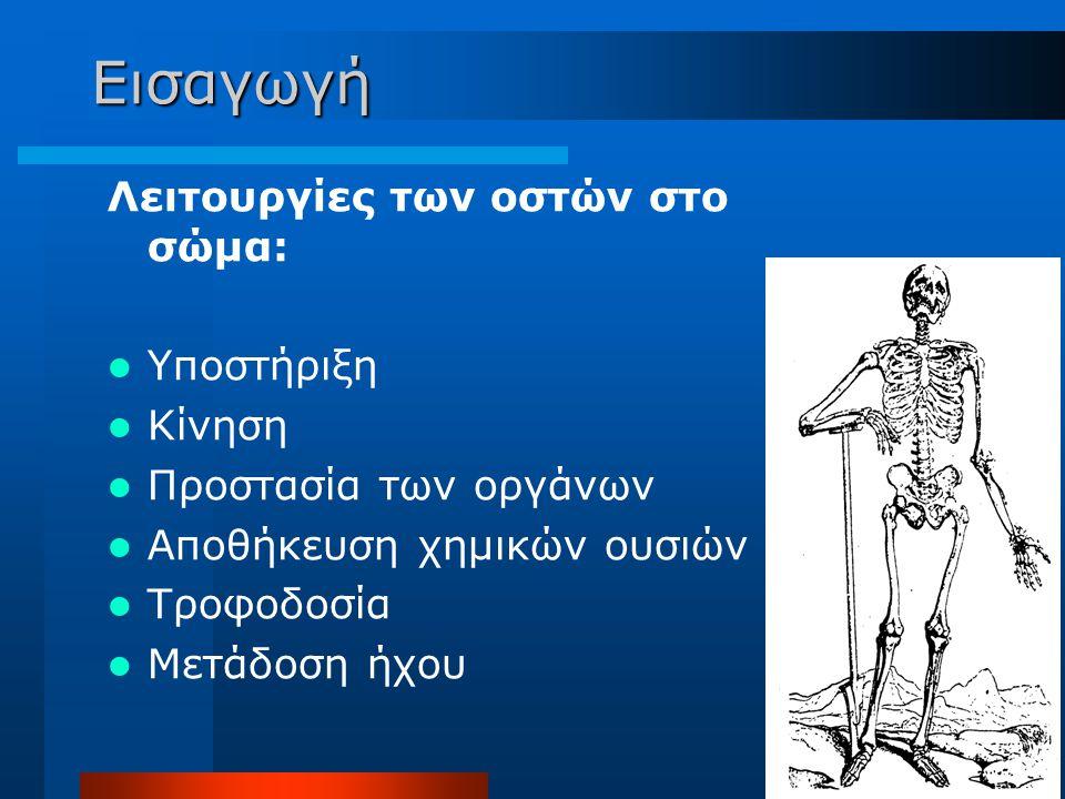 Εισαγωγή Λειτουργίες των οστών στο σώμα: Υποστήριξη Κίνηση Προστασία των οργάνων Αποθήκευση χημικών ουσιών Τροφοδοσία Μετάδοση ήχου