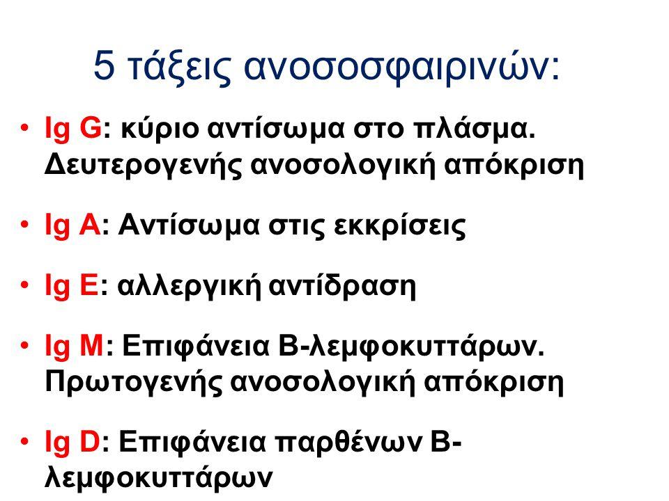 5 τάξεις ανοσοσφαιρινών: Ig G: κύριο αντίσωμα στο πλάσμα. Δευτερογενής ανοσολογική απόκριση Ig A: Αντίσωμα στις εκκρίσεις Ig E: αλλεργική αντίδραση Ig