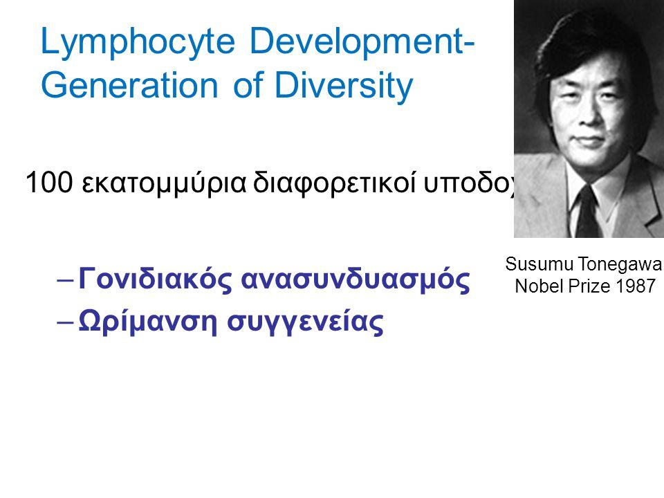 Lymphocyte Development- Generation of Diversity 100 εκατομμύρια διαφορετικοί υποδοχείς –Γονιδιακός ανασυνδυασμός –Ωρίμανση συγγενείας Susumu Tonegawa