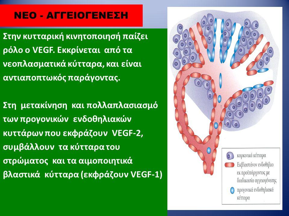 ΝΕΟ - ΑΓΓΕΙΟΓΕΝΕΣΗ Στην κυτταρική κινητοποιησή παίζει ρόλο ο VEGF. Εκκρίνεται από τα νεοπλασματικά κύτταρα, και είναι αντιαποπτωκός παράγοντας. Στη με
