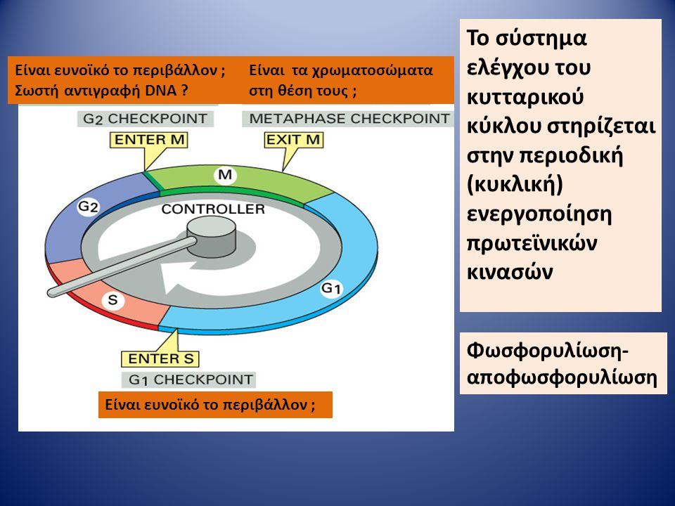 Είναι ευνοϊκό το περιβάλλον ; Σωστή αντιγραφή DNA ? Είναι τα χρωματοσώματα στη θέση τους ; Το σύστημα ελέγχου του κυτταρικού κύκλου στηρίζεται στην πε