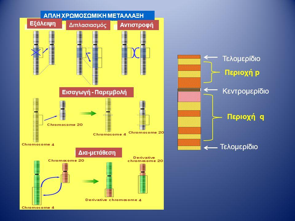 ΑΠΛΗ ΧΡΩΜΟΣΩΜΙΚΗ ΜΕΤΑΛΛΑΞΗ Εξάλειψη ΔιπλασιασμόςΑντιστροφή Εισαγωγή - Παρεμβολή Δια-μετάθεση Τελομερίδιο Κεντρομερίδιο Περιοχή p Περιοχή q