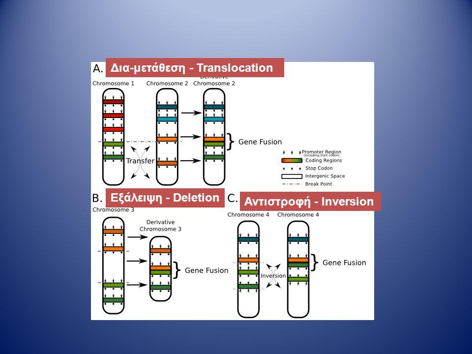 Δια-μετάθεση - Translocation Εξάλειψη - Deletion Αντιστροφή - Inversion