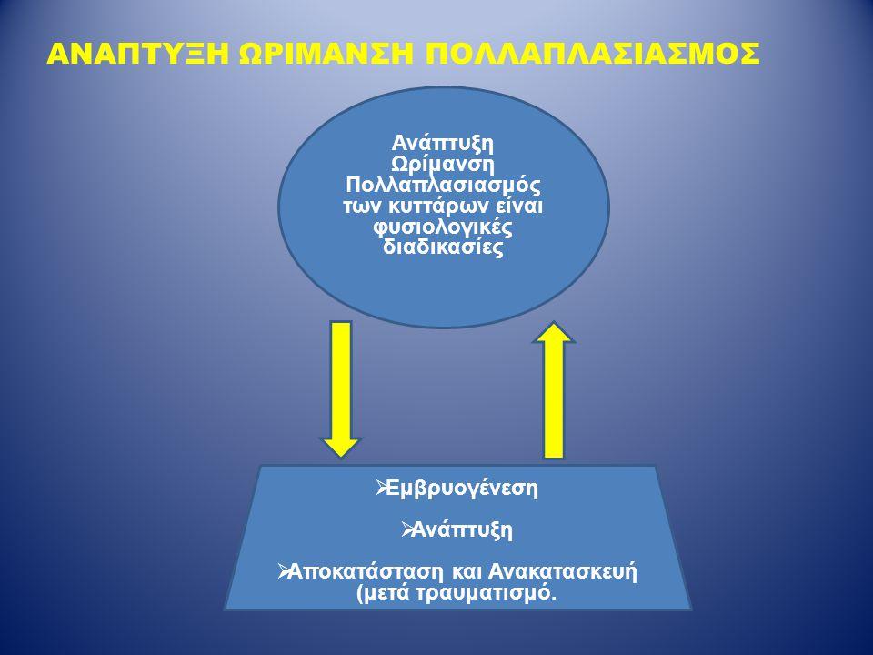 ΑΝΑΠΤΥΞΗ ΩΡΙΜΑΝΣΗ ΠΟΛΛΑΠΛΑΣΙΑΣΜΟΣ Ανάπτυξη Ωρίμανση Πολλαπλασιασμός των κυττάρων είναι φυσιολογικές διαδικασίες  Εμβρυογένεση  Ανάπτυξη  Αποκατάστα