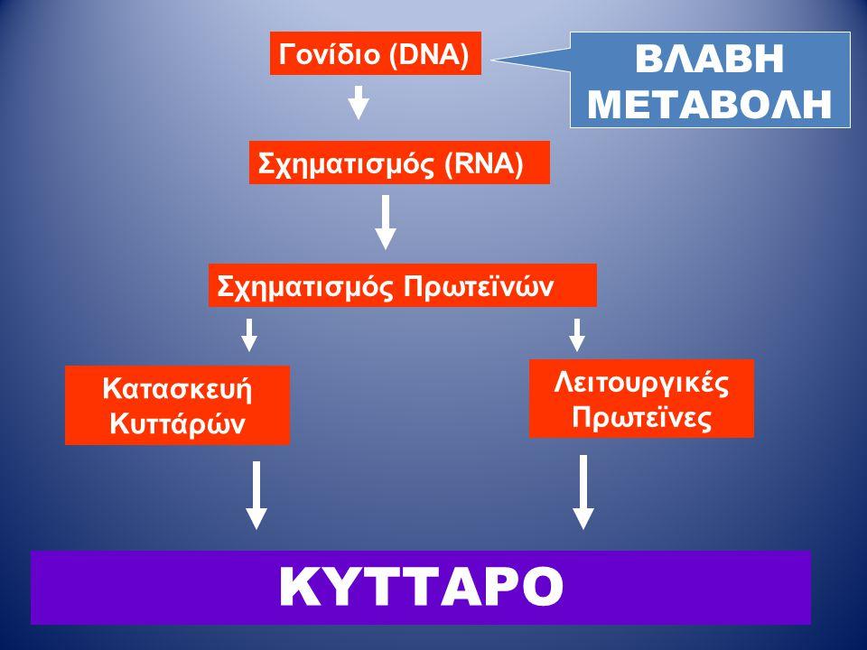 ΚΥΤΤΑΡΟ Γονίδιο (DNA) Σχηματισμός (RNA) Σχηματισμός Πρωτεϊνών Κατασκευή Κυττάρών Λειτουργικές Πρωτεϊνες ΒΛΑΒΗ ΜΕΤΑΒΟΛΗ