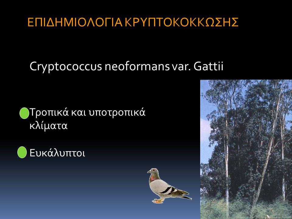 Epidemiology I 14 ΕΠΙΔΗΜΙΟΛΟΓΙΑ ΚΡΥΠΤΟΚΟΚΚΩΣΗΣ Cryptococcus neoformans var. Gattii Τροπικά και υποτροπικά κλίματα Ευκάλυπτοι