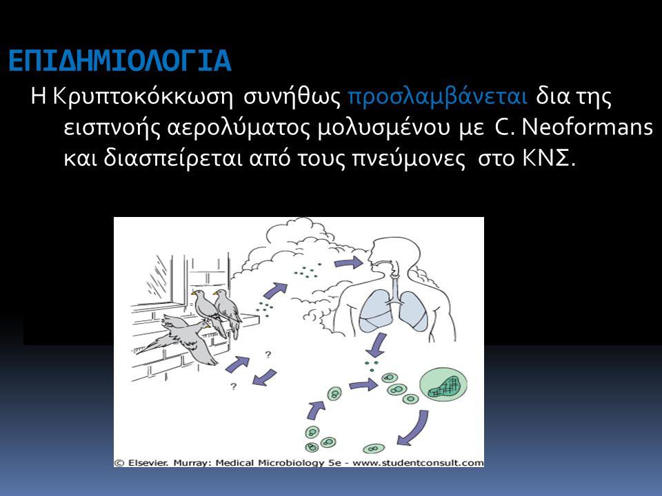 ΕΠΙΔΗΜΙΟΛΟΓΙΑ Η Κρυπτοκόκκωση συνήθως προσλαμβάνεται δια της εισπνοής αερολύματος μολυσμένου με C. Neoformans και διασπείρεται από τους πνεύμονες στο
