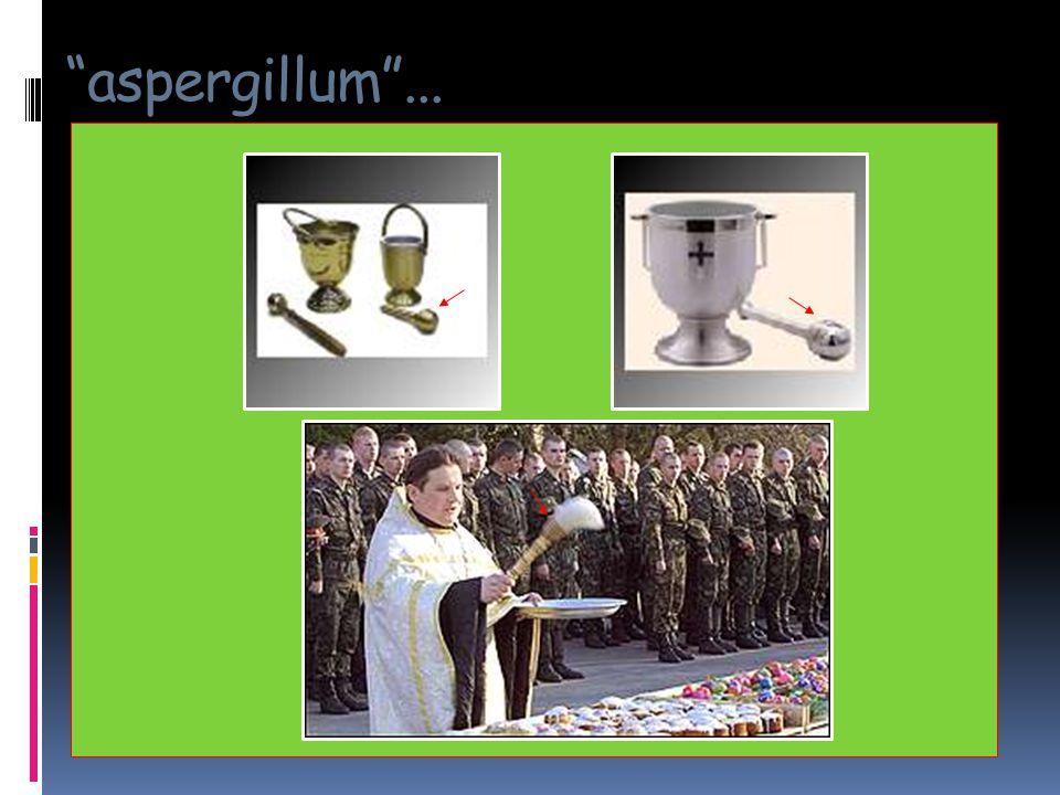 """""""aspergillum""""..."""