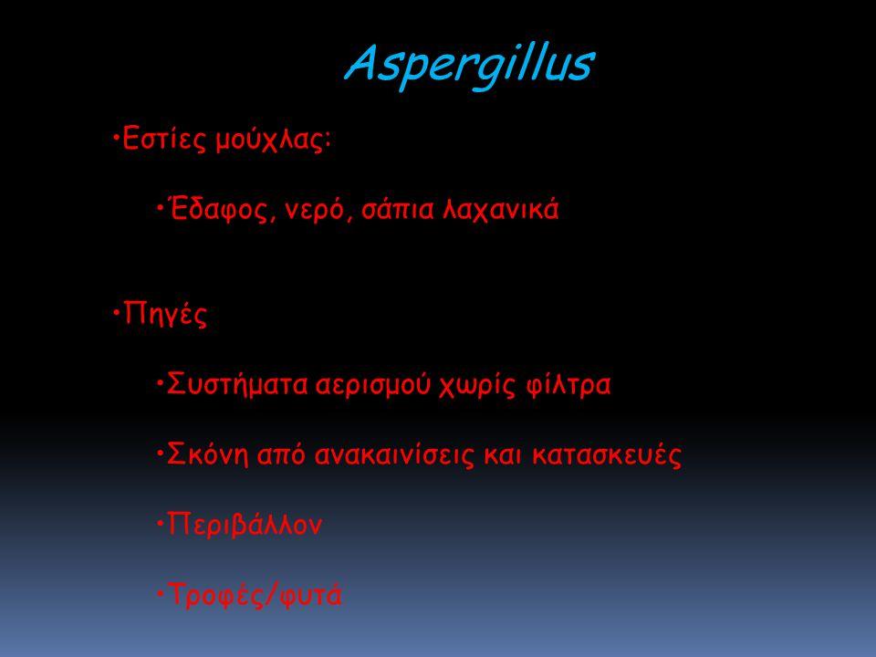 Aspergillus Εστίες μούχλας: Έδαφος, νερό, σάπια λαχανικά Πηγές Συστήματα αερισμού χωρίς φίλτρα Σκόνη από ανακαινίσεις και κατασκευές Περιβάλλον Τροφές