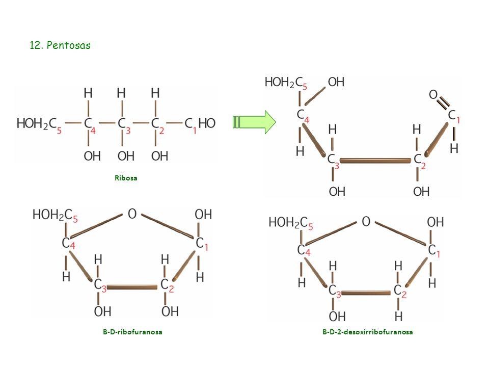 12. Pentosas Ribosa Β-D-ribofuranosaΒ-D-2-desoxirribofuranosa