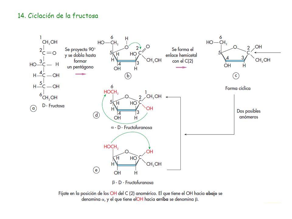 14. Ciclación de la fructosa H