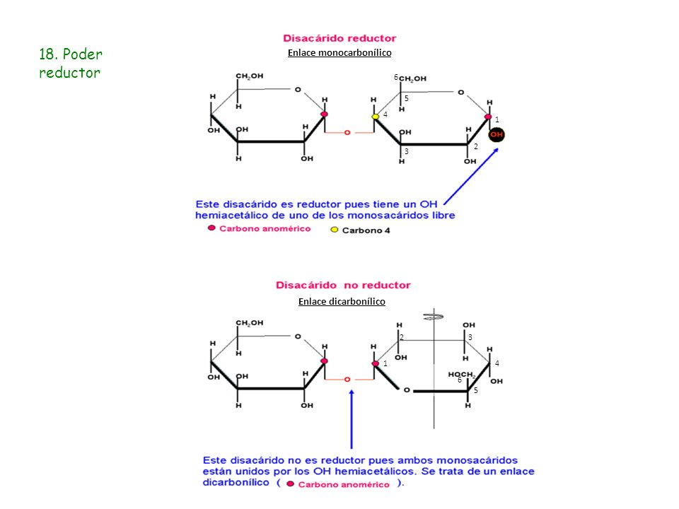 18. Poder reductor 1 2 3 4 5 6 1 5 6 4 32 Enlace monocarbonílico Enlace dicarbonílico