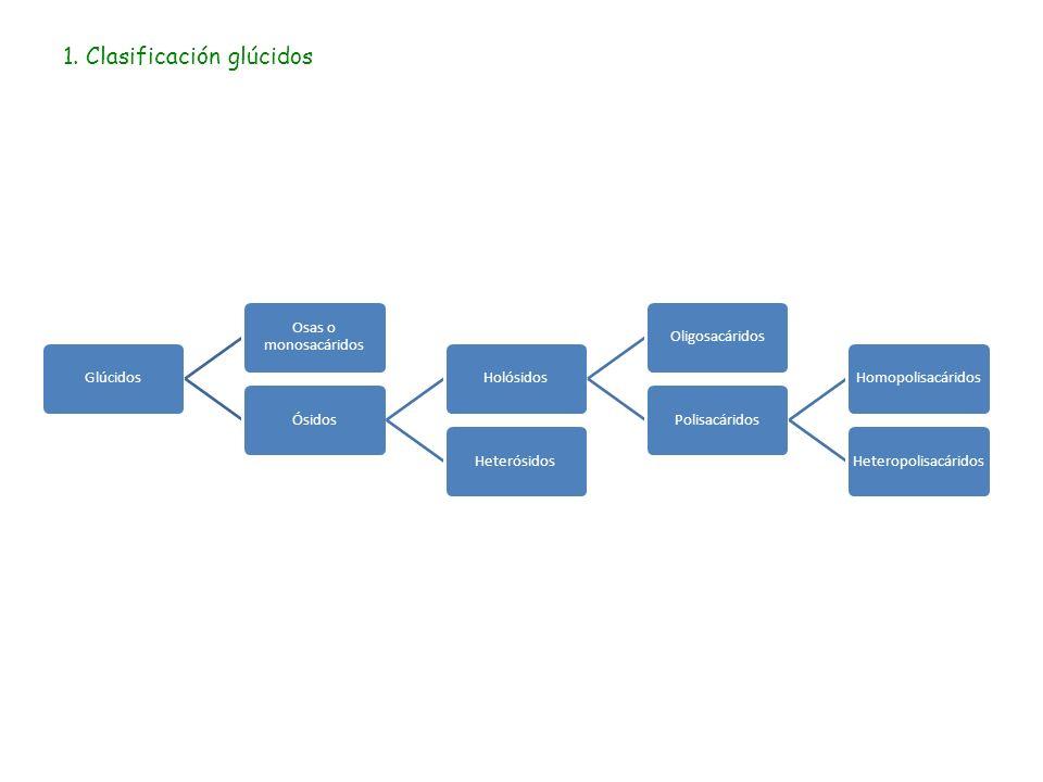 1. Clasificación glúcidos Glúcidos Osas o monosacáridos ÓsidosHolósidosOligosacáridosPolisacáridosHomopolisacáridosHeteropolisacáridosHeterósidos
