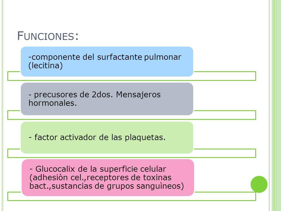 F UNCIONES : -componente del surfactante pulmonar (lecitina) - precusores de 2dos. Mensajeros hormonales. - factor activador de las plaquetas. - Gluco