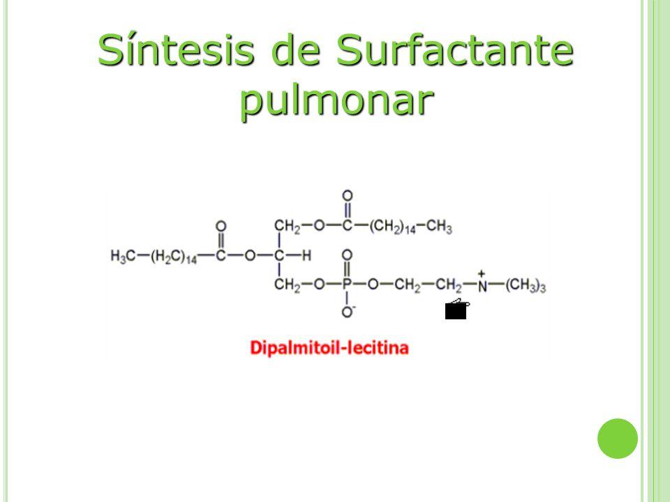 Síntesis de Surfactante pulmonar