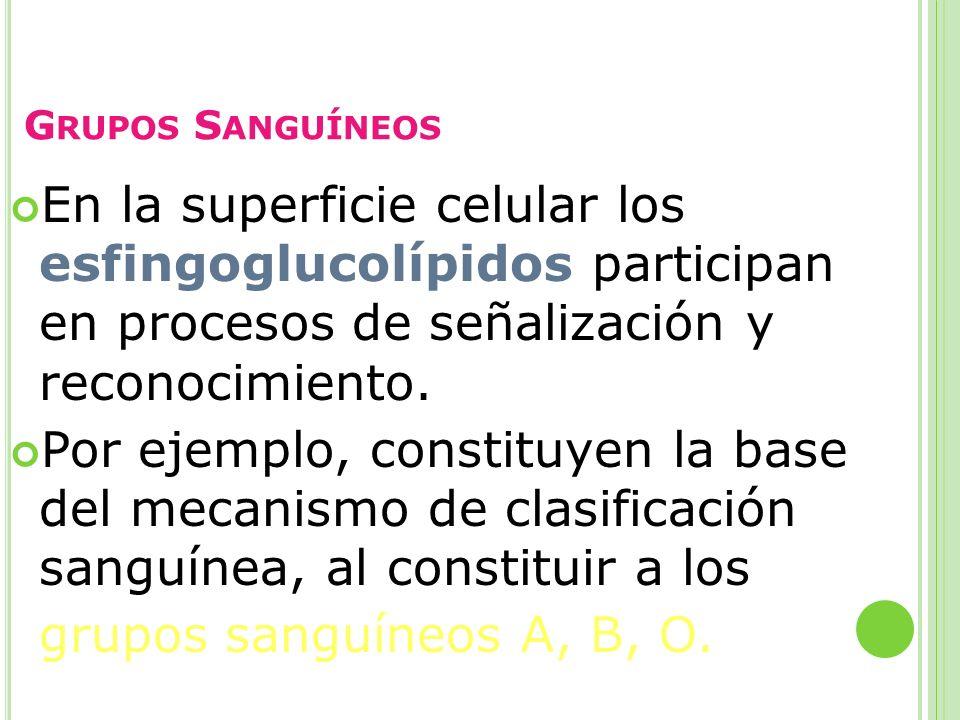 G RUPOS S ANGUÍNEOS En la superficie celular los esfingoglucolípidos participan en procesos de señalización y reconocimiento. Por ejemplo, constituyen