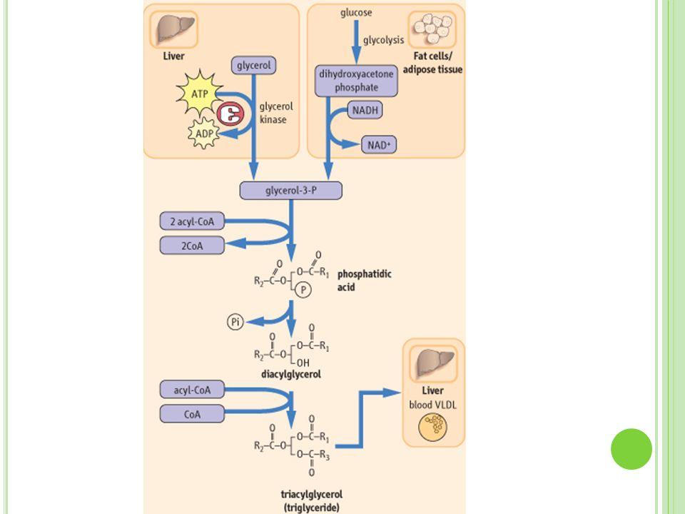 E SFINGOLÍPIDOS : TRASTORNOS HEREDITARIOS EnfermedadProducto de dépósito Enzima Tay-SachsGM1 gangliósidoHexosaminidasa A GaucherGlucocerebrósidoß-Glucosidasa FabryTrihexosido de ceramina α-Galactosidasa KrabbeGalactocerebrósidoß-galactosidasa