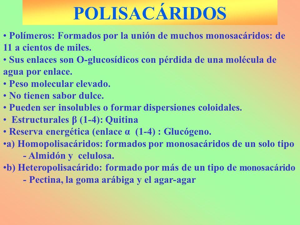 POLISACÁRIDOS Polímeros: Formados por la unión de muchos monosacáridos: de 11 a cientos de miles. Sus enlaces son O-glucosídicos con pérdida de una mo