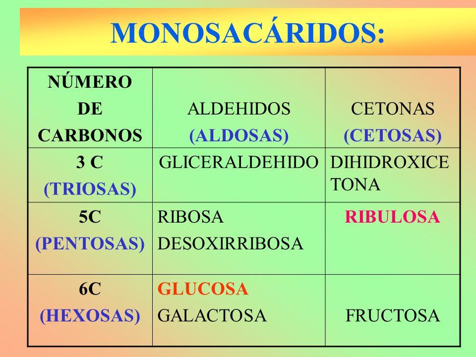 MONOSACÁRIDOS: NÚMERO DE CARBONOS ALDEHIDOS (ALDOSAS) CETONAS (CETOSAS) 3 C (TRIOSAS) GLICERALDEHIDODIHIDROXICE TONA 5C (PENTOSAS) RIBOSA DESOXIRRIBOS
