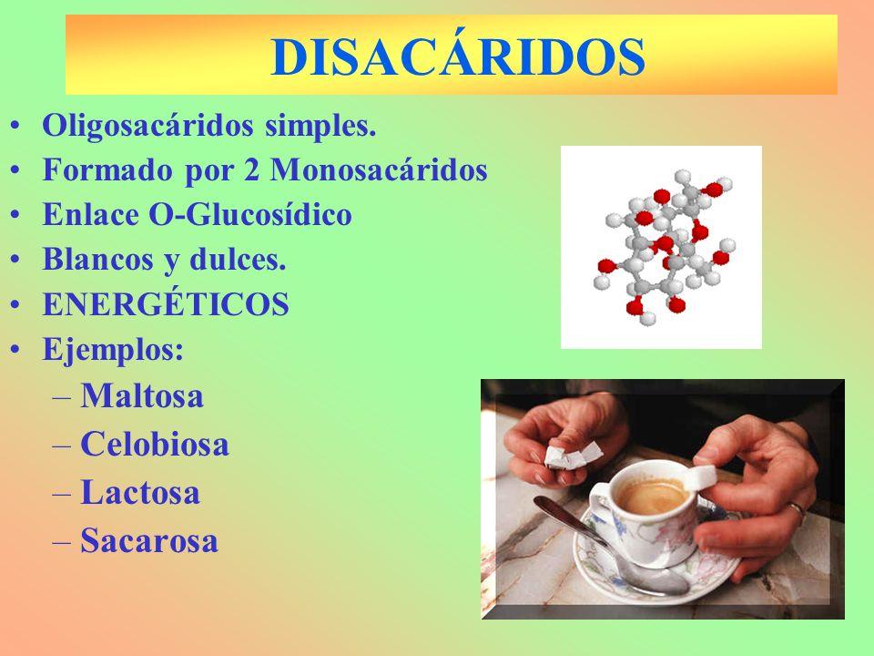 DISACÁRIDOS Oligosacáridos simples. Formado por 2 Monosacáridos Enlace O-Glucosídico Blancos y dulces. ENERGÉTICOS Ejemplos: –Maltosa –Celobiosa –Lact