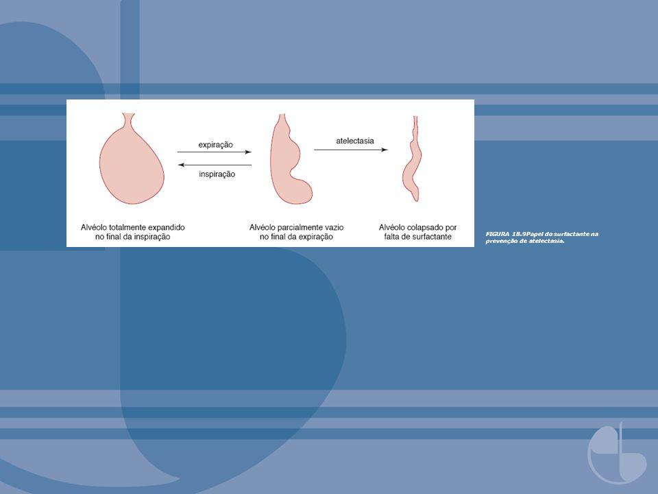 FIGURA 18.9Papel do surfactante na prevenção de atelectasia.