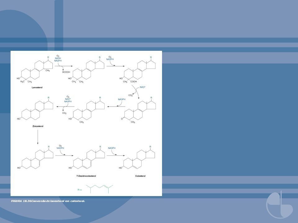FIGURA 18.36Conversão de lanosterol em colesterol.