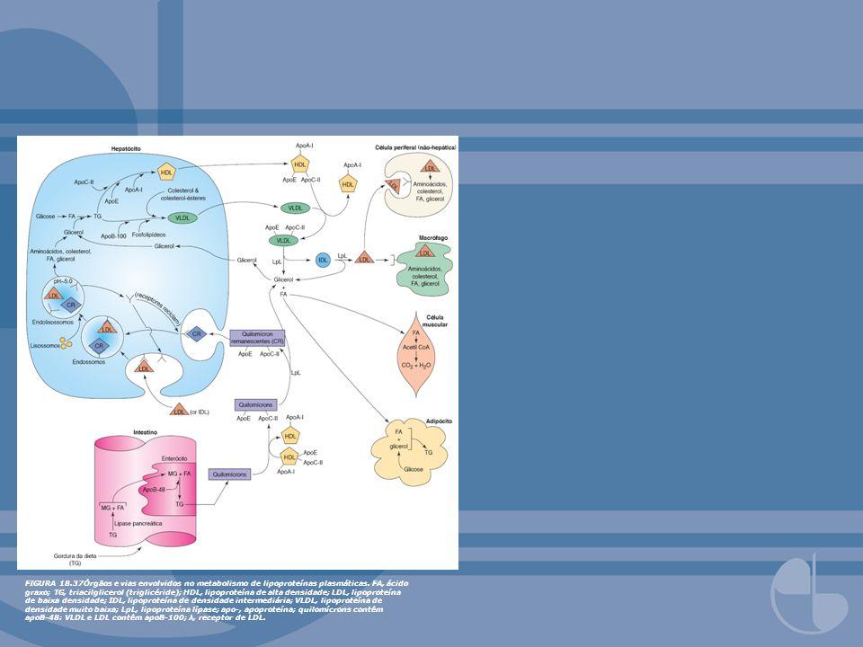 FIGURA 18.38Transporte reverso de colesterol mostrando proteínas e enzimas envolvidas.