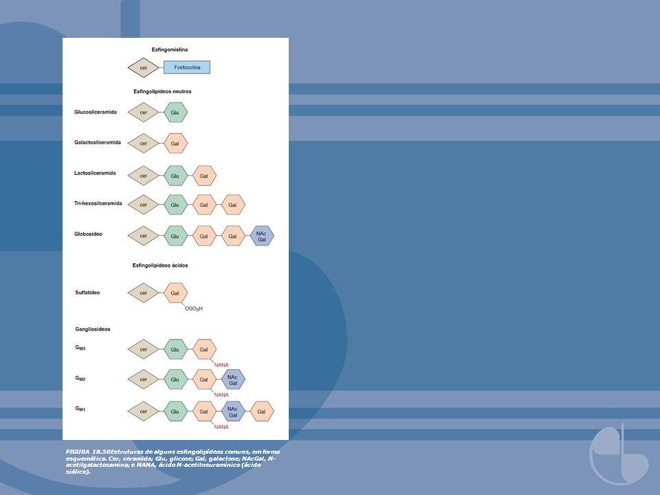 FIGURA 18.50Estruturas de alguns esngolipídeos comuns, em forma esquemática. Cer, ceramida; Glu, glicose; Gal, galactose; NAcGal, N- acetilgalactosami
