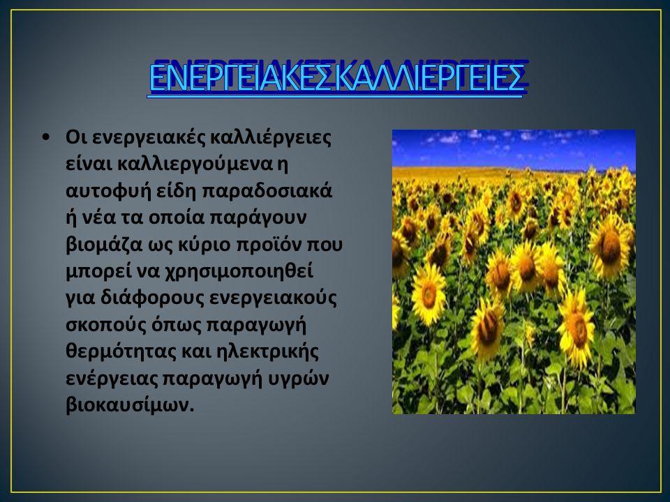 Οι ενεργειακές καλλιέργειες είναι καλλιεργούμενα η αυτοφυή είδη παραδοσιακά ή νέα τα οποία παράγουν βιομάζα ως κύριο προϊόν που μπορεί να χρησιμοποιηθ