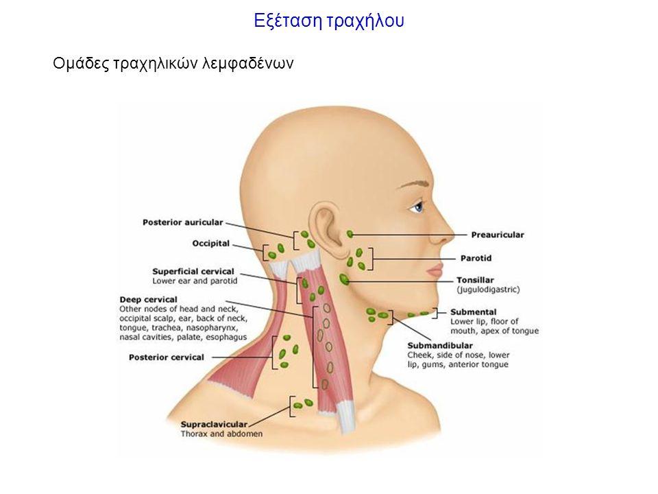 Εξέταση τραχήλου Μέθοδοι Επισκόπηση θέση: τοποθέτηση κεφαλής σε ελαφρά έκταση και στροφή αντίθετη της εξετάζουσας πλευράς ευρήματα: θέση τραχείας, συμμετρία τραχήλου, διογκώσεις Ακρόαση ήχος αναπνοής αρτηρίες, θυρεοειδής επέκταση φυσημάτων από την καρδιά