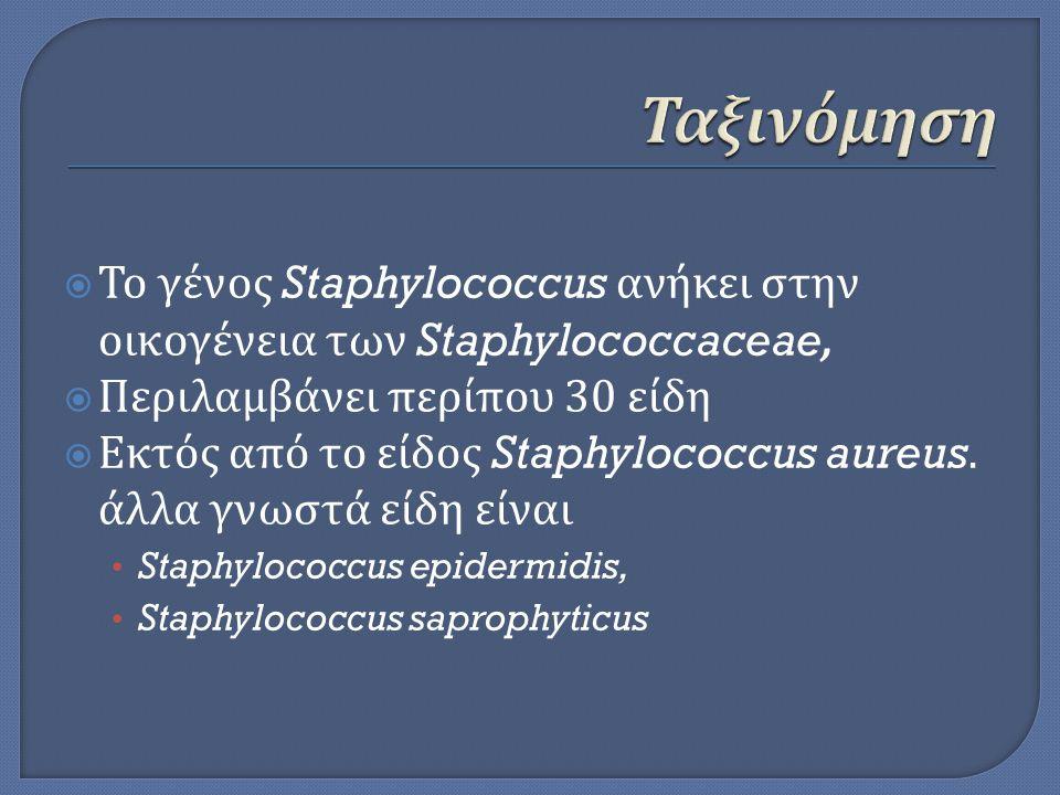  Το γένος Staphylococcus ανήκει στην οικογένεια των Staphylococcaceae,  Περιλαμβάνει περίπου 30 είδη  Εκτός από το είδος Staphylococcus aureus. άλλ
