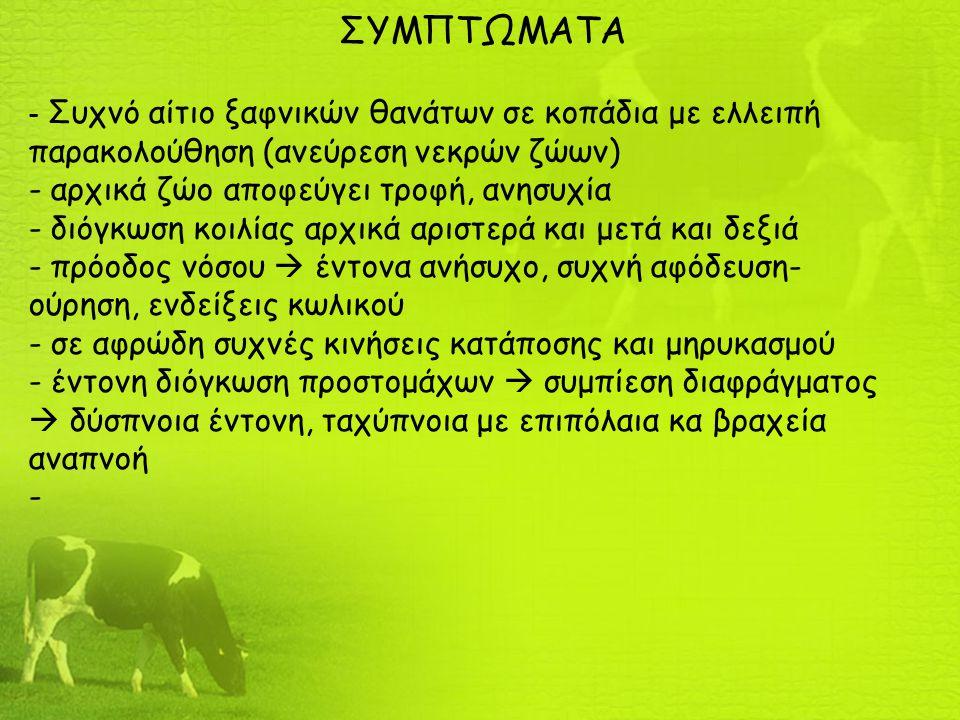 ΣΥΜΠΤΩΜΑΤΑ - Συχνό αίτιο ξαφνικών θανάτων σε κοπάδια με ελλειπή παρακολούθηση (ανεύρεση νεκρών ζώων) - αρχικά ζώο αποφεύγει τροφή, ανησυχία - διόγκωση