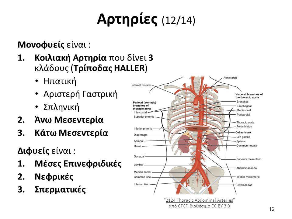 Αρτηρίες (12/14) Μονοφυείς είναι : 1.Κοιλιακή Αρτηρία που δίνει 3 κλάδους (Τρίποδας HALLER) Ηπατική Αριστερή Γαστρική Σπληνική 2.Άνω Μεσεντερία 3.Κάτω Μεσεντερία Διφυείς είναι : 1.Μέσες Επινεφριδικές 2.Νεφρικές 3.Σπερματικές 2124 Thoracic Abdominal Arteries από CFCF διαθέσιμο CC BY 3.02124 Thoracic Abdominal ArteriesCFCFCC BY 3.0 12