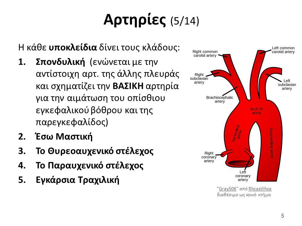 Αρτηρίες (5/14) Η κάθε υποκλείδια δίνει τους κλάδους: 1.Σπονδυλική (ενώνεται με την αντίστοιχη αρτ.