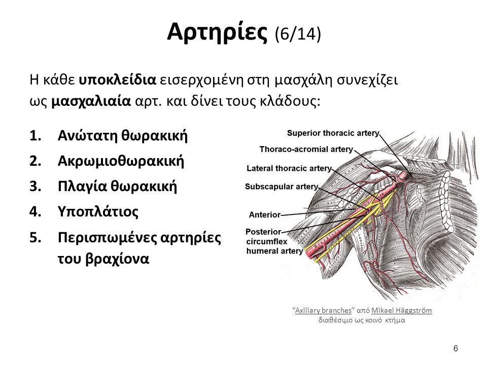 Αρτηρίες (6/14) 1.Ανώτατη θωρακική 2.Ακρωμιοθωρακική 3.Πλαγία θωρακική 4.Υποπλάτιος 5.Περισπωμένες αρτηρίες του βραχίονα Η κάθε υποκλείδια εισερχομένη στη μασχάλη συνεχίζει ως μασχαλιαία αρτ.