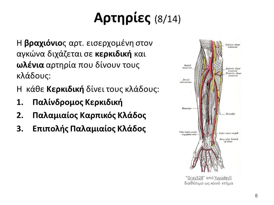 Φλέβες (5/6) II.Άνω Κοίλη Φλέβα: Καταλήγουν 2 Ανώνυμες που σχηματίζονται από την ένωση της έσω σφαγίτιδας με την υποκλείδιο (φέρουν αίμα από την κεφαλή και τα άνω άκρα) Άζυγος και οι 2 Ημιάζυγες (φέρουν αίμα από τον θώρακα) Όλες οι άλλες φλέβες του σώματος έχουν το όνομα των αρτηριών που τις συνοδεύουν και ενώνονται για το σχηματισμό της άνω και κάτω κοίλης φλέβας που καταλήγουν στον δεξιό κόλπο της καρδιάς.