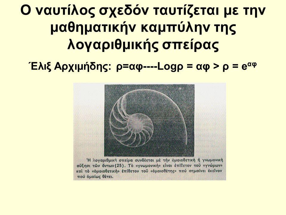 Ο ναυτίλος σχεδόν ταυτίζεται με την μαθηματικήν καμπύλην της λογαριθμικής σπείρας Έλιξ Αρχιμήδης: ρ=αφ----Logρ = αφ > ρ = e αφ