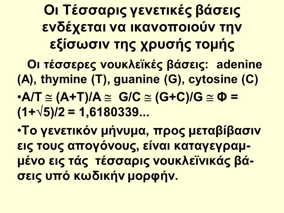 Οι Τέσσαρις γενετικές βάσεις ενδέχεται να ικανοποιούν την εξίσωσιν της χρυσής τομής Οι τέσσερες νουκλεϊκές βάσεις: adenine (Α), thymine (T), guanine (