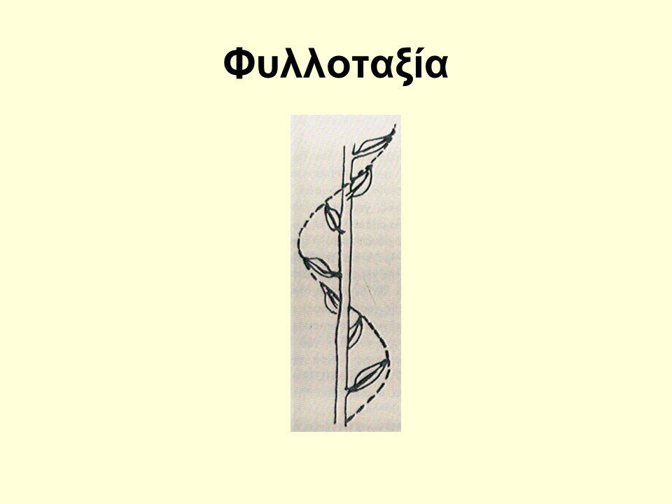 Αντιστοιχία πυθαγορείου μουσικής κλίμακος μετά της βυζαντινής και της ευρωπαϊκής Ο κύβος (γη) έχει 6 έδρας, 8 κορυφάς και 12 ακμάς, ήτοι εκφράζονται δια του κύβου ο πρώτος, ο δεύτερος και ο τέταρτος όρος της αναλογίας, 6 : 8 = 9 : 12  1 : 4/3 = 3/2 : 2 do fa sol do 1 9/8 (9/8)2 4/3 3/2 (3/2)χ(9/8) (3/2)χ(9/8)χ(9/8) 2 1 9/8 81/64 4/3 3/2 27/16 243/128 2 υπάτη παρυπάτη λιχανός μέση παραμέση τρίτη παρανήτη νήτη τη τα τε τω τη τα τω τη πα βου γα δι και ζω νη πα do re mi fa sol la si do
