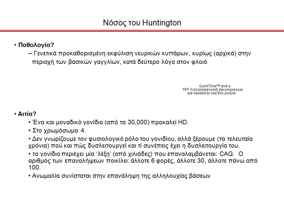 Νόσος του Huntington Παθολογία.