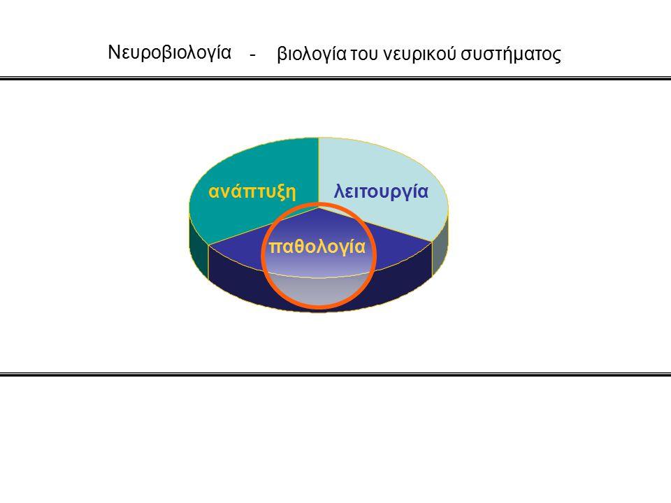 Nευροβιολογία ανάπτυξηλειτουργία παθολογία - βιολογία του νευρικού συστήματος