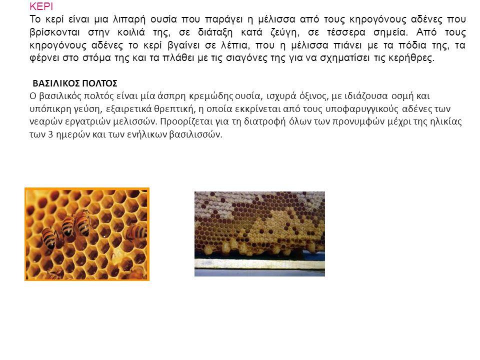 ΚΕΡΙ Το κερί είναι μια λιπαρή ουσία που παράγει η μέλισσα από τους κηρογόνους αδένες που βρίσκονται στην κοιλιά της, σε διάταξη κατά ζεύγη, σε τέσσερα