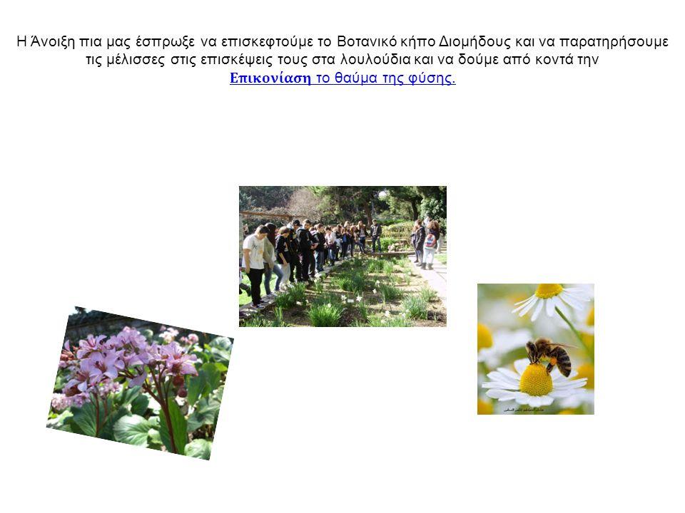 Η Άνοιξη πια μας έσπρωξε να επισκεφτούμε το Βοτανικό κήπο Διομήδους και να παρατηρήσουμε τις μέλισσες στις επισκέψεις τους στα λουλούδια και να δούμε